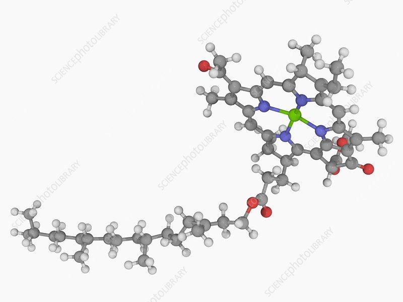 Chlorophyll B molecule