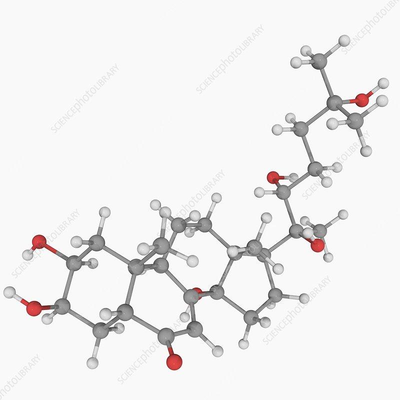 Ecdysterone molecule