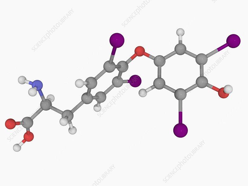 Levothyroxine drug molecule