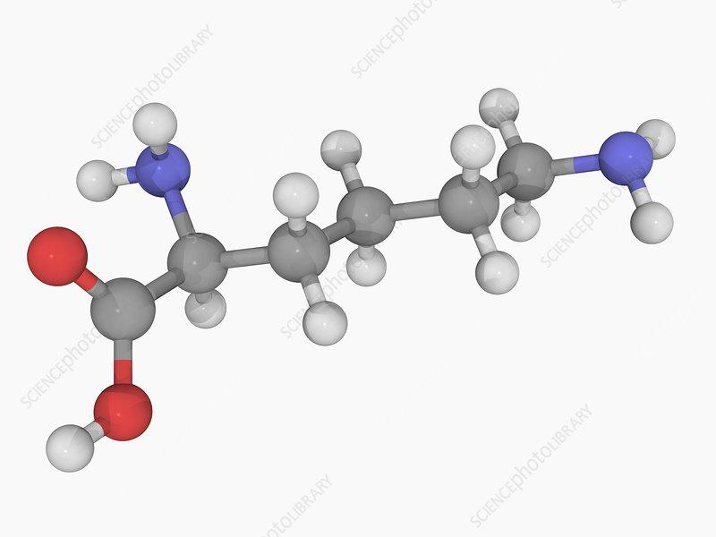 Lysine molecule