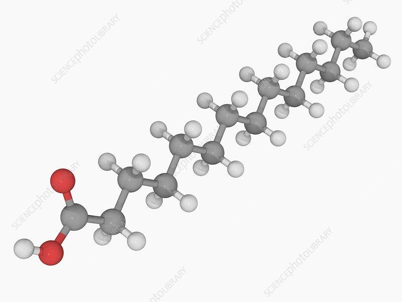Myristic acid molecule