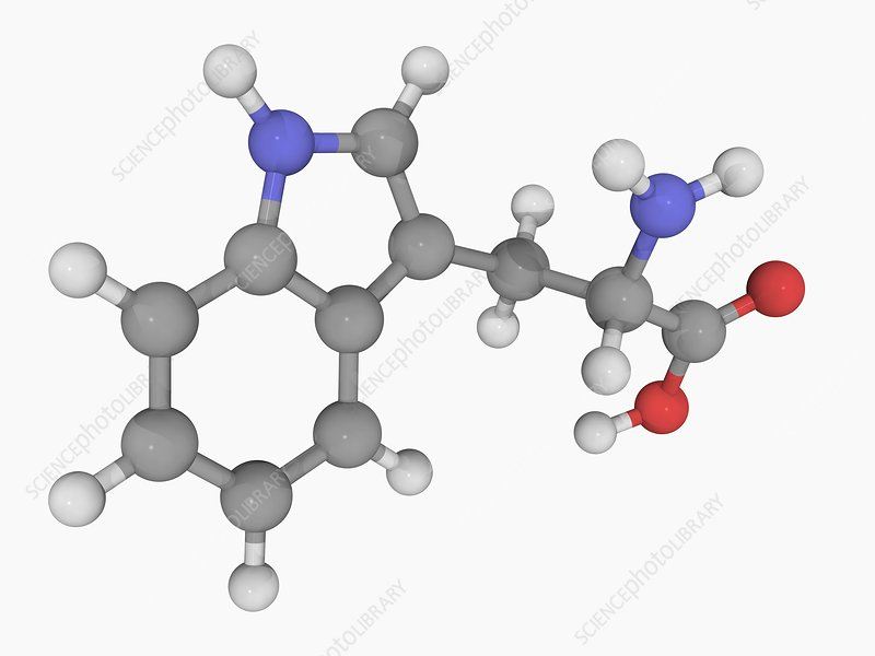 Tryptophan molecule
