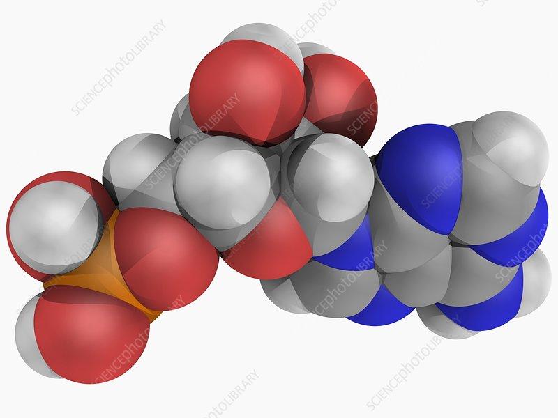 Adenosine monophosphate molecule