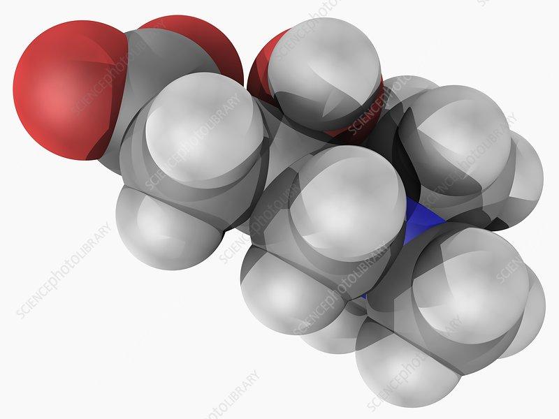 Carnitine molecule
