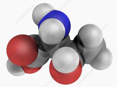 Threonine molecule