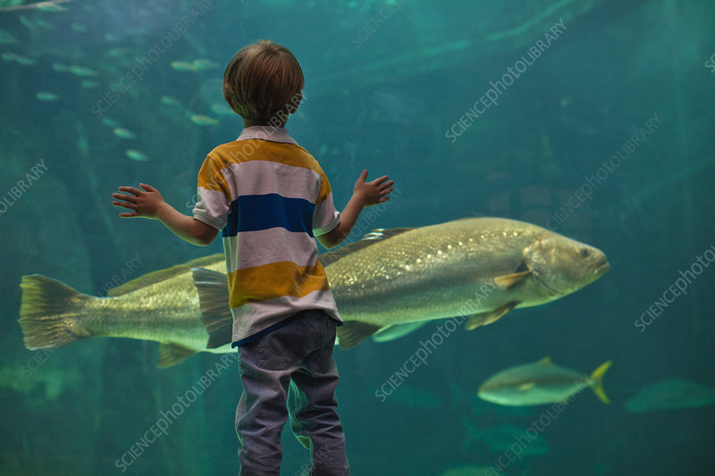 Boy admiring fish in aquarium