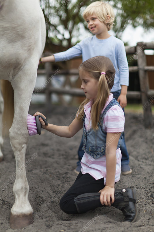 Children brushing horse's coat