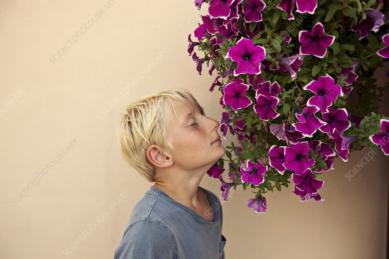 Boy smelling potted flowers outdoors