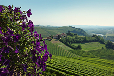 Flowers overlooking vineyards
