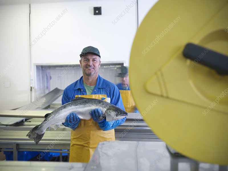 Worker in fish processing plant
