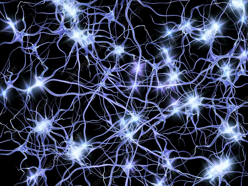 Nerve cells firing, artwork - Stock Image F004/9969 - Science Photo ...