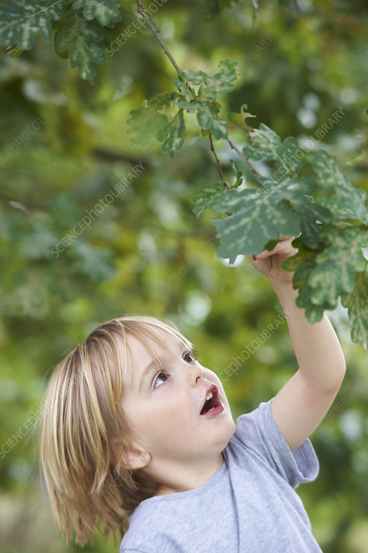 Boy examining leaves outdoors
