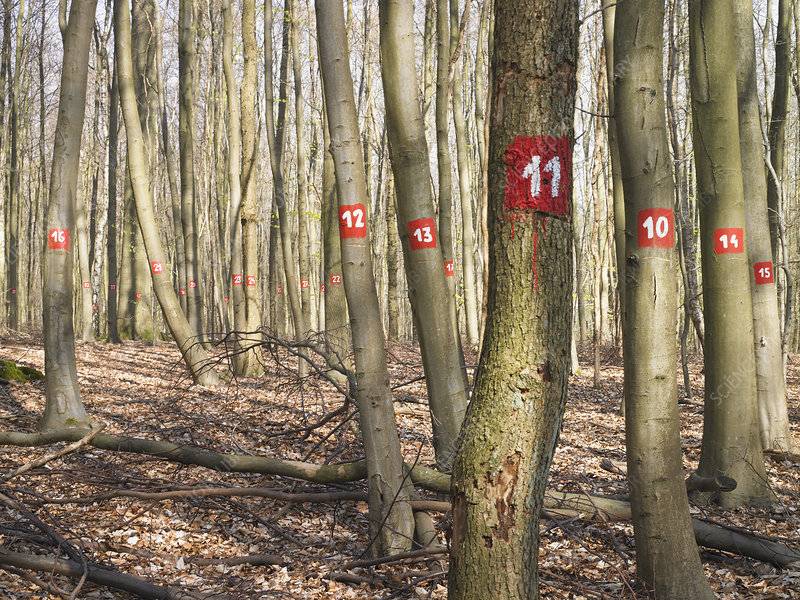 Numbered trees in forest