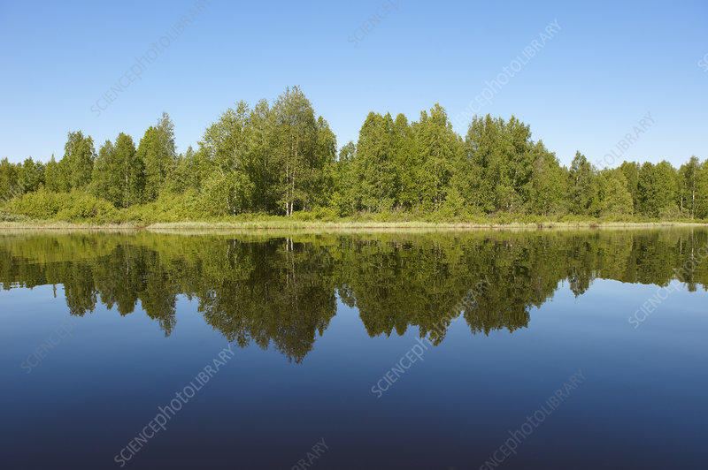 Trees reflected in still lake