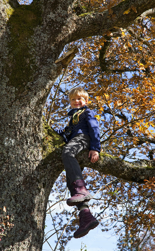 Boy playing in tree