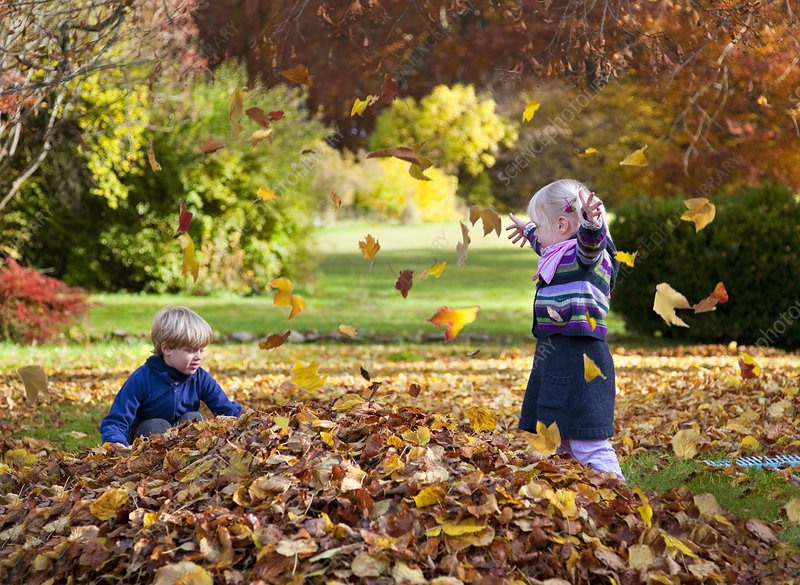 Children playing in pile of leaves