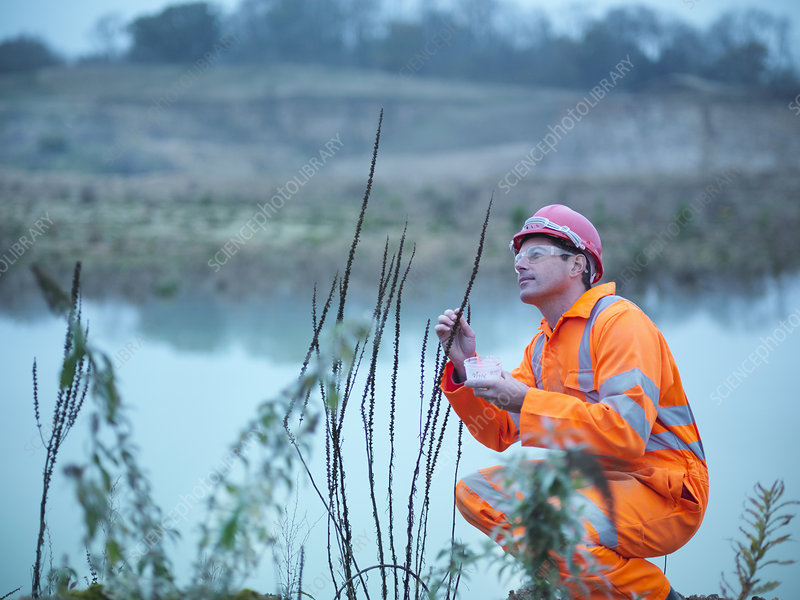 Worker examining plants in quarry
