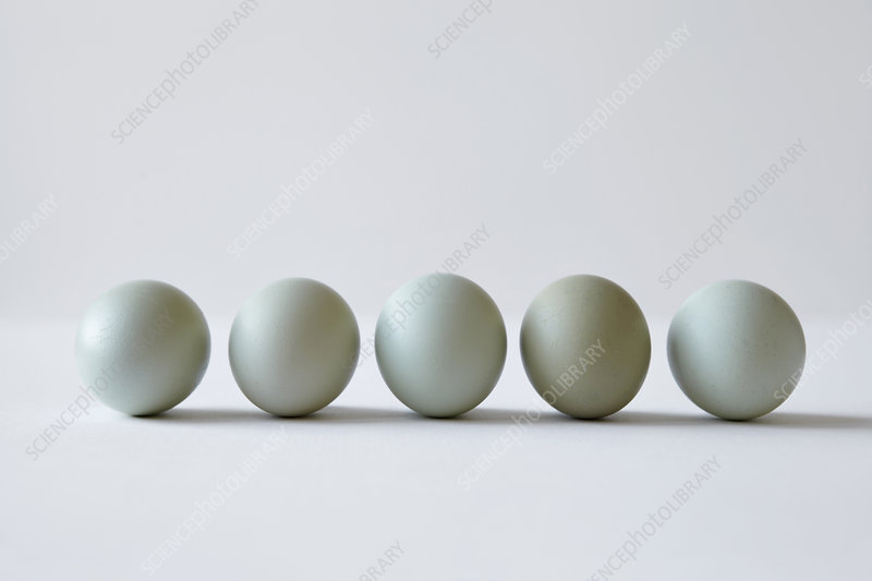 Close up of eggs lined up