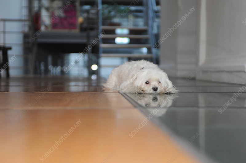 Dog laying on tiled floor