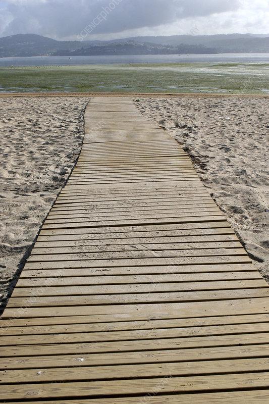 Wooden walkway on sandy beach