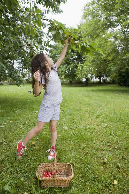 Girl picking fruit in backyard