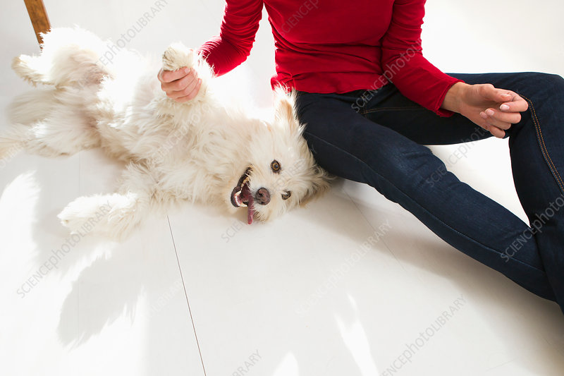 Woman playing with dog on floor