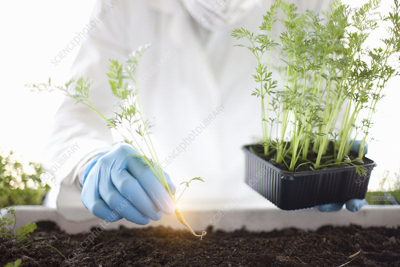 Scientist planting glowing plant
