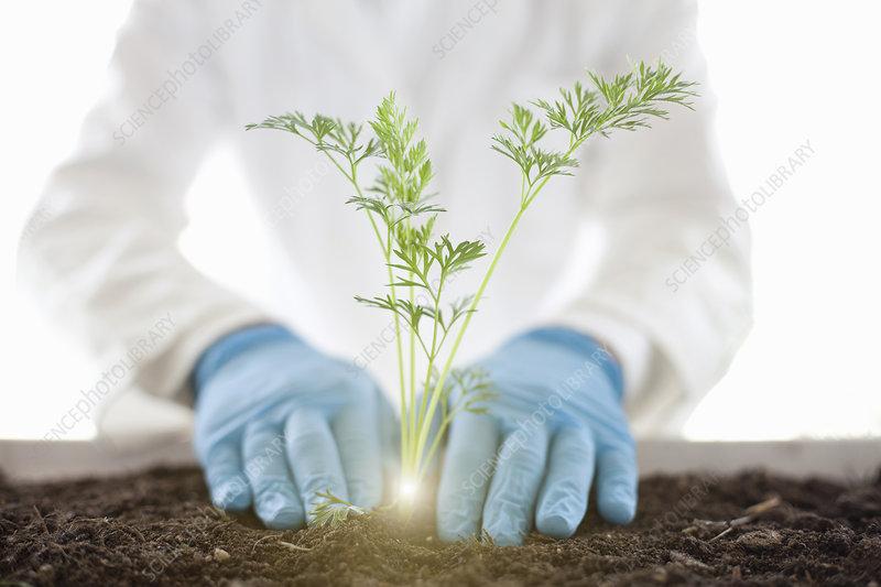 Scientist planting glowing plant
