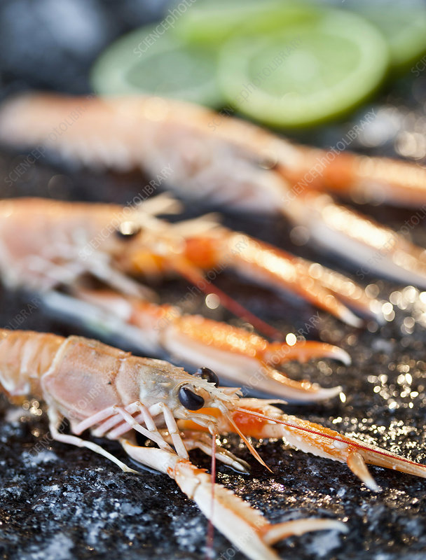 Close up of langoustine with lime