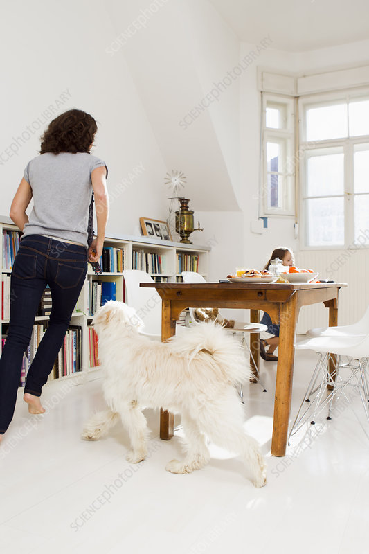 Family playing with dog in kitchen