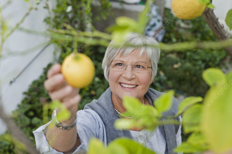 Older woman picking fruit outdoors