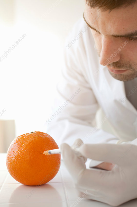 Scientist injecting liquid into orange