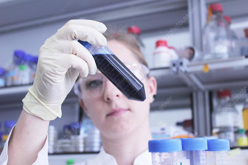 Scientist examining test tube of liquid