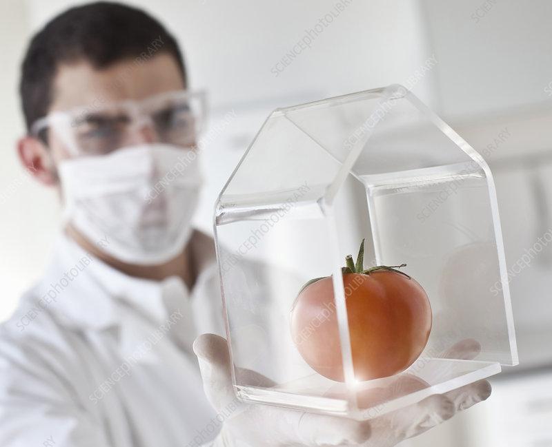 Scientist examining tomato in glass jar
