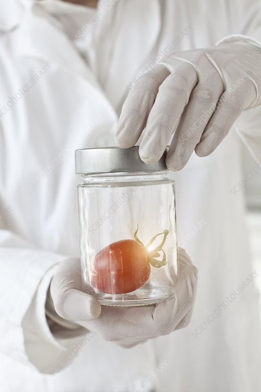 Scientist examining tomato in glass jar