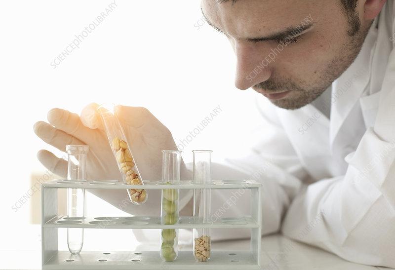 Scientist examining seeds in test tubes