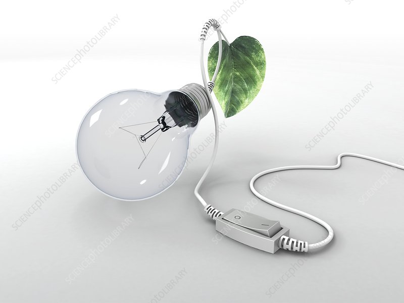 Electric light bulb, leaf and switch