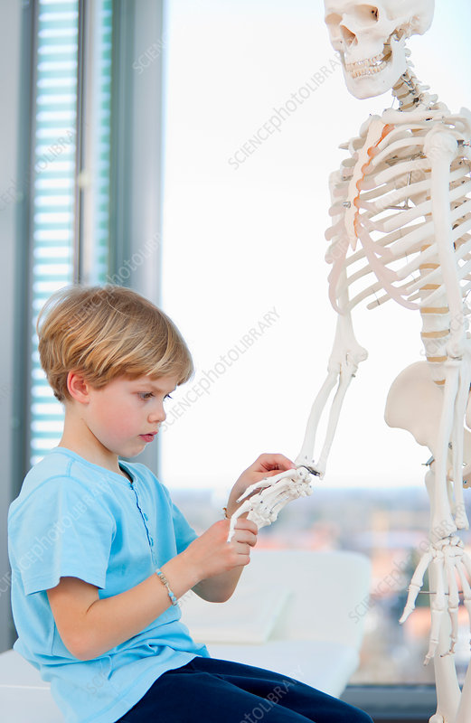 Boy examining skeleton at doctor