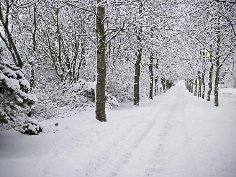 Trees and road in snowy landscape