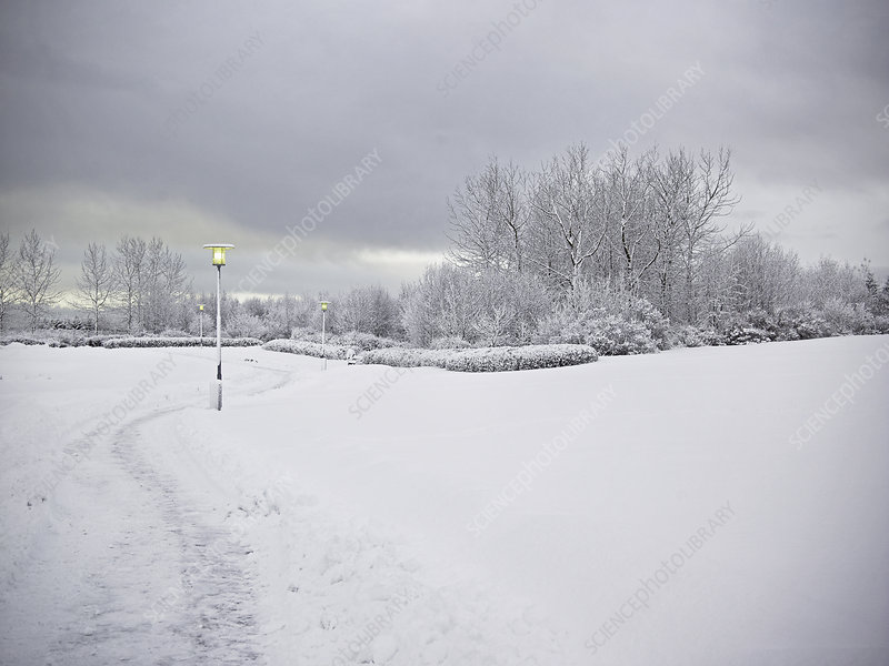Trees and dirt path in snowy landscape