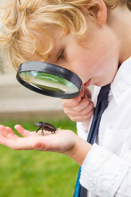 Boy examining bug with magnifying glass
