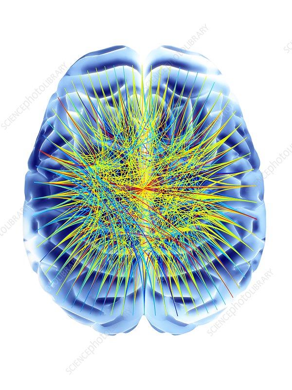 Brain and circular network diagram