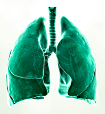Healthy lungs, artwork