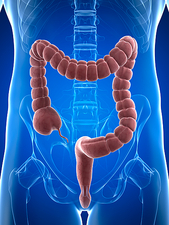 Healthy large intestine, artwork