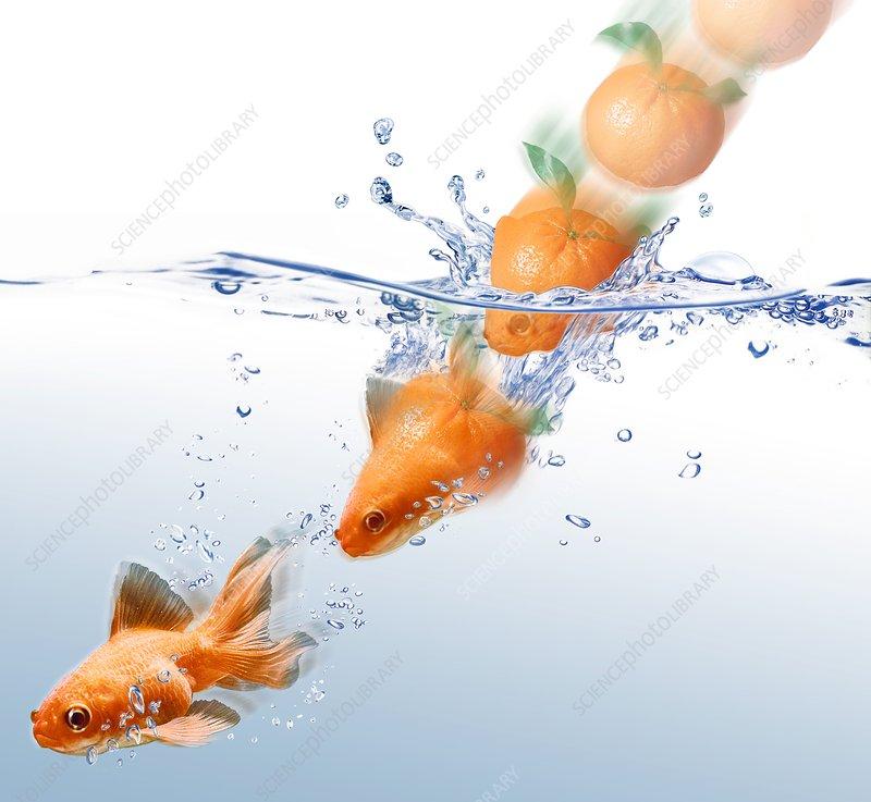 Orange turning into a goldfish, artwork
