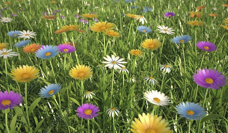 Wildflower meadow, artwork