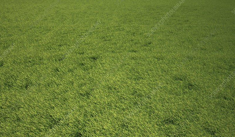 Grass meadow, artwork
