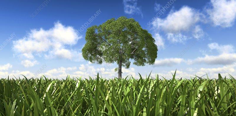 Tree in a field, artwork