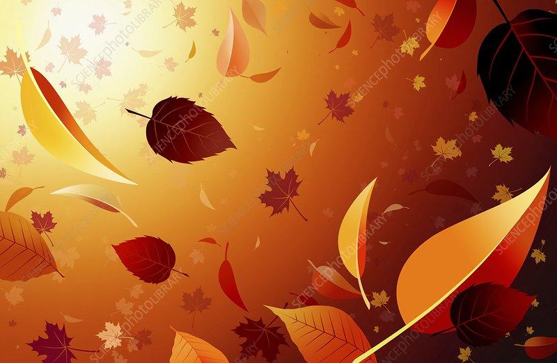 Autumn leaves, artwork