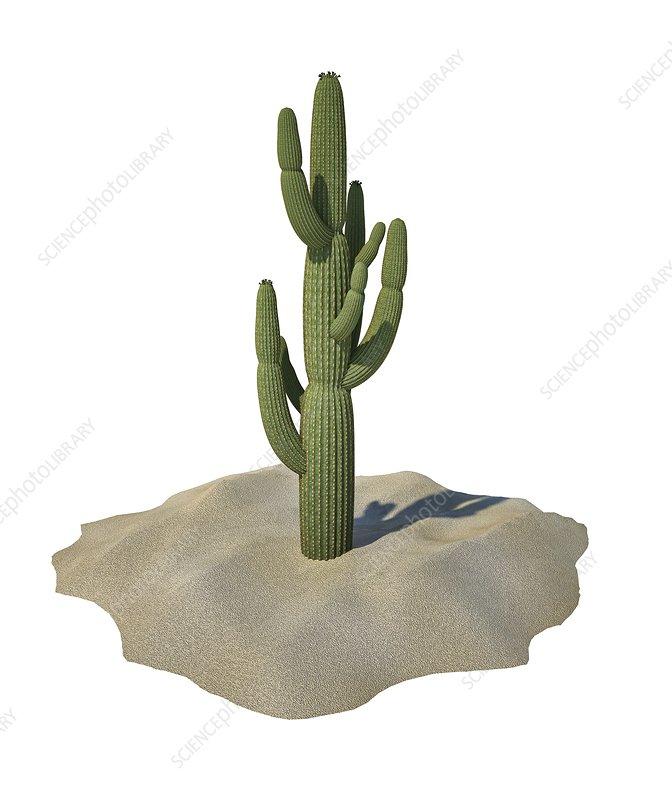 Cactus, artwork